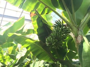 バナナワニ園